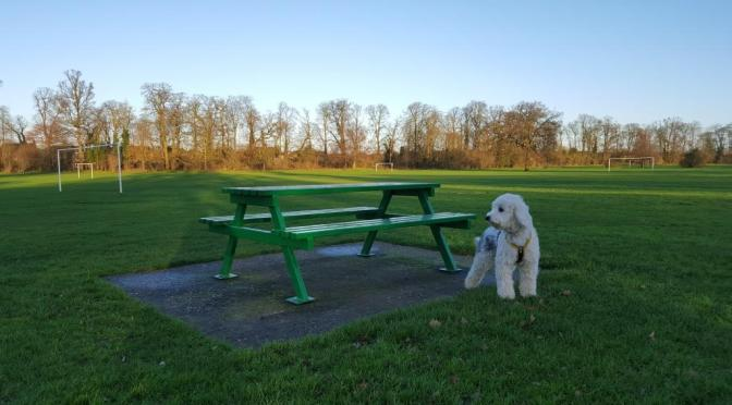 Dog by a park bench at Priory Park, St Neots