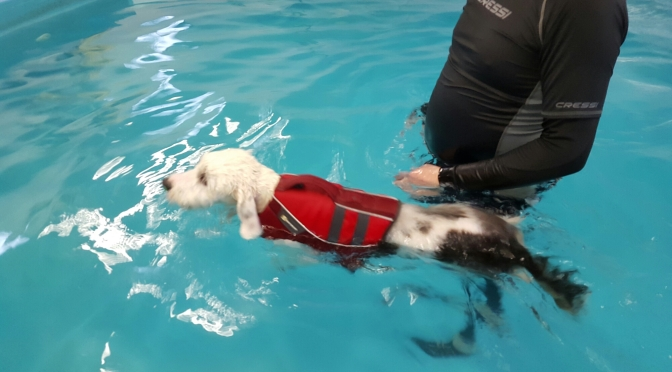 Fozzy's First Swimming Lesson