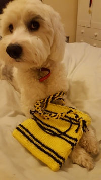 Dog destroys a Hufflepuff bag