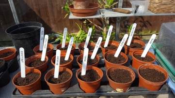 Plant pots with labels