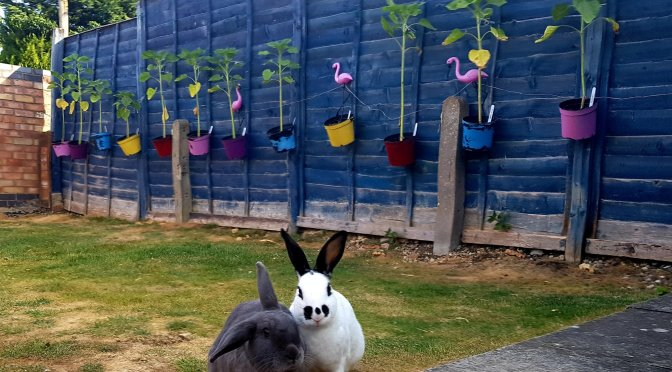 Rabbits in front of sunflowers